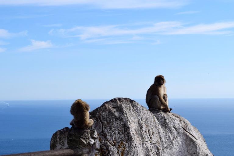 monkeys gib